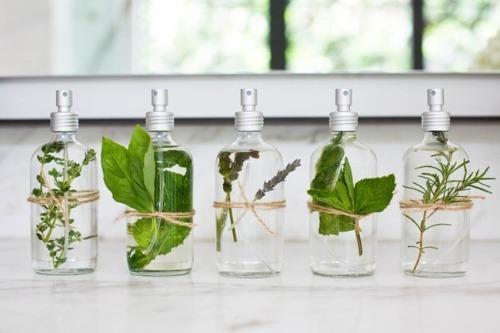 Tinh dầu là các loại dưỡng chất quý được chiết xuất từ thảo dược
