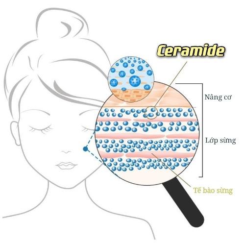 """Ceramide được ví như một """"thần dược"""" giúp khôi phục lại hàng rào bảo vệ da"""